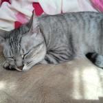 猫が布を食べてしまう異食症(ウールサッキング)についての対策と体験談