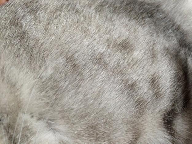 猫にペット用ブラシフーリー使ってみた