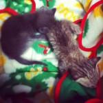 捨て猫を拾ったらやる事まとめ…3匹拾った経験から子猫の飼い方などを紹介します