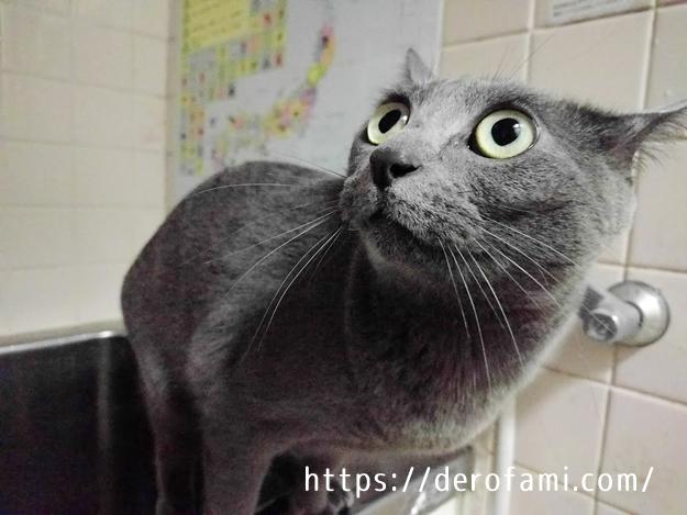猫をお風呂に入れる必要性と頻度…抜け毛が気になったら入れよう