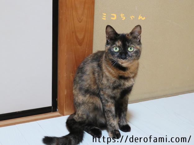 サビ猫の性格と魅力まとめ…頭が良くて甘えん坊なので飼いやすい!