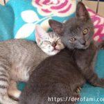 子猫のハムとマロ