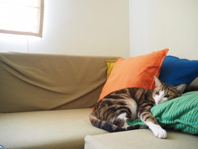 猫の室内飼いする際の危険と注意点…家の中でもケガや事故に気をつけよう