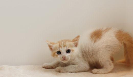 猫が嫌がる生活音まとめ…ドライヤーや掃除機はなるべくネコから離れた場所で使おう