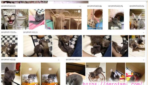 猫の写真や動画保存は容量無制限のGoogleフォトがオススメ…無料で使えてとにかく便利