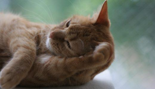 猫の花粉症の症状や予防、対策まとめ…毎日掃除をして空気清浄機を使おう