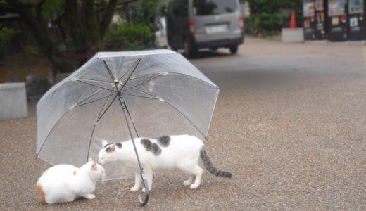 梅雨などの湿気が多い時期は猫に影響はある?…体調を崩しやすいので注意