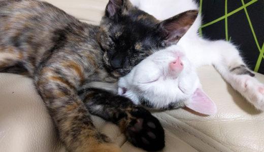 猫の譲渡会で里親になるまでの流れまとめ…トライアル期間があるので安心です