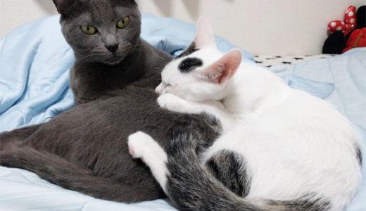 子猫チロとモモが来てから1ヶ月半が経過しました…先住猫ハムとマロも慣れてきました