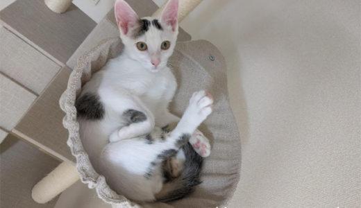 子猫チロちゃんが血尿をしました…動物病院へ通っています