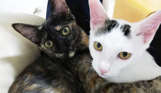 新入り猫のチロとモモの去勢・避妊手術が終わりました♪