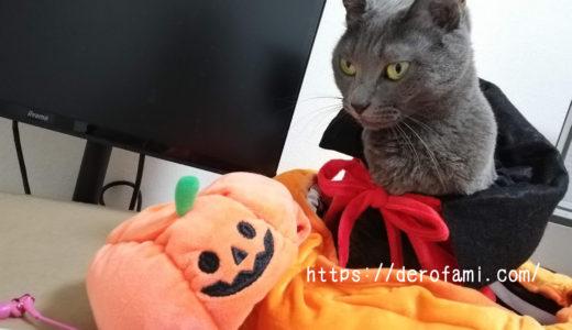 3coinsの猫のハロウィングッズを紹介…かぼちゃベッドがとにかく可愛い!