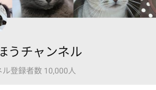 You Tube「ねこほうチャンネル」登録者数1万人突破しました!