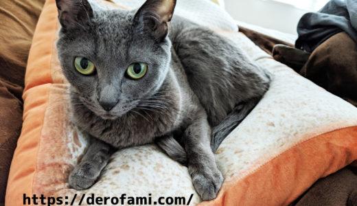 ニトリのモチモチ食パンクッションが猫に大人気…プレゼントなどにオススメ!